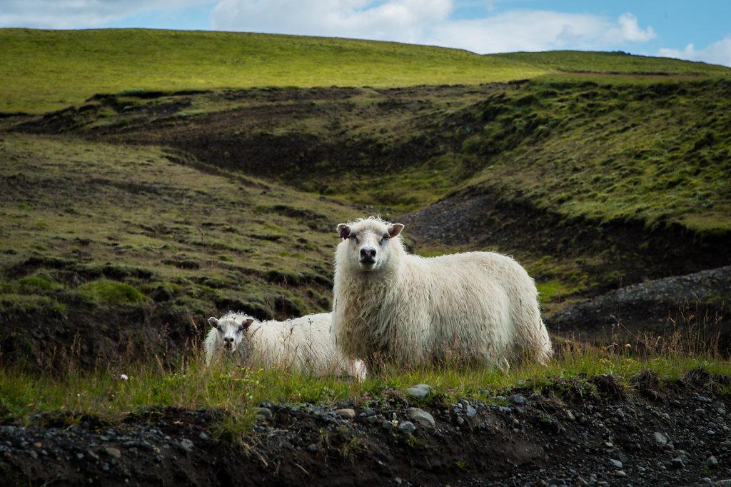 20170816-Iceland-17-7122.jpg